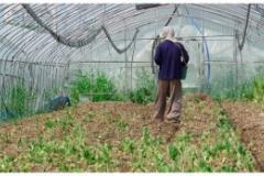 농민 being Farmer-being